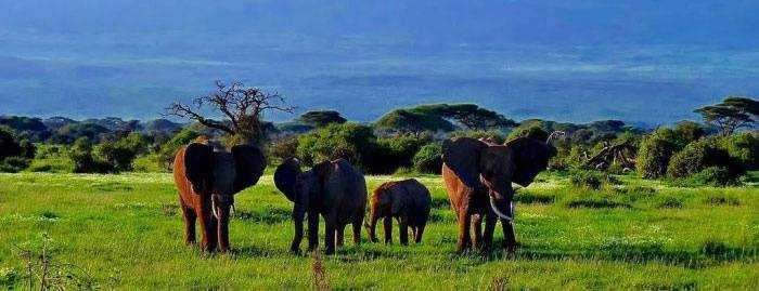Национальный заповедник Амбосели в Кении